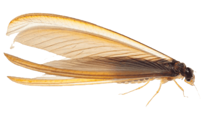Blog Pest Control Canberra